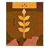 Beans, lentils, and whole grains